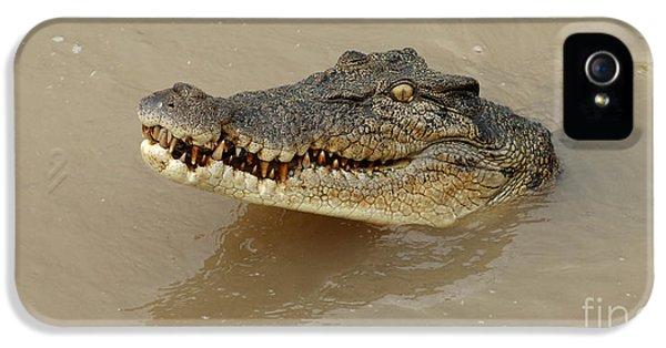 Salt Water Crocodile 3 IPhone 5 Case by Bob Christopher