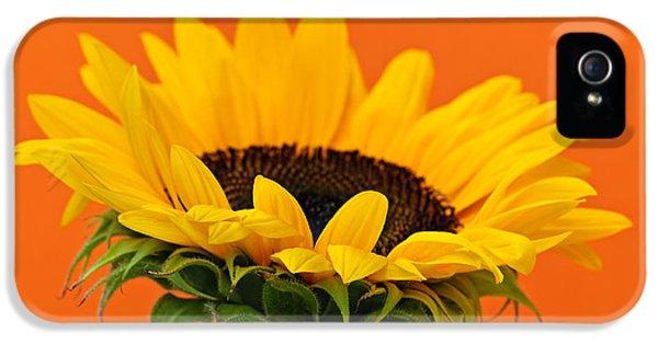 Sunflower iPhone 5 Case - Sunflower Closeup by Elena Elisseeva