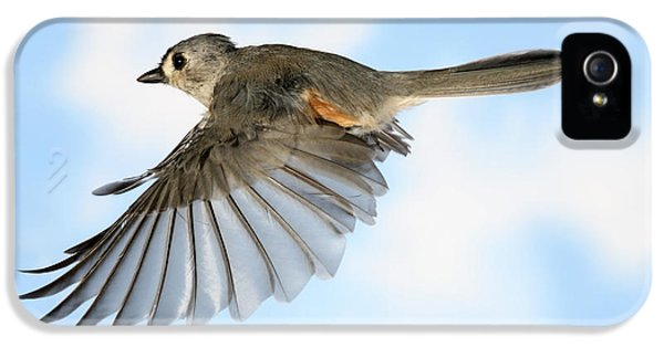 Tufted Titmouse In Flight IPhone 5 Case by Ted Kinsman