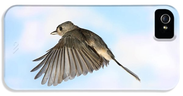 Tufted Titmouse In Flight IPhone 5 / 5s Case by Ted Kinsman