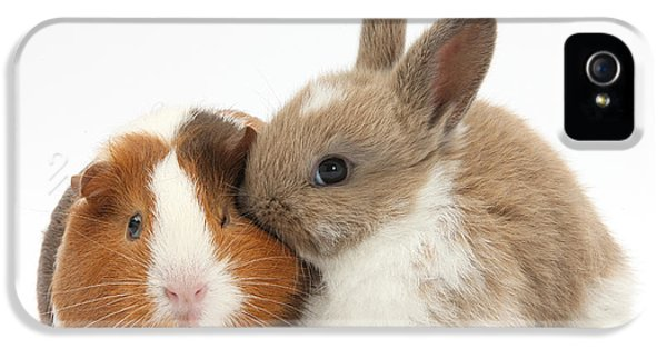 Baby Rabbit And Guinea Pig IPhone 5 Case