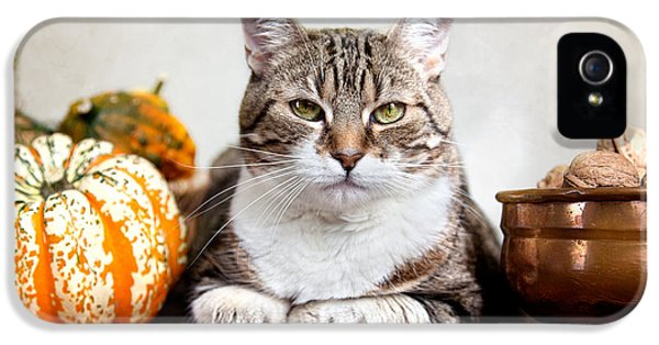 Cat And Pumpkins IPhone 5 Case