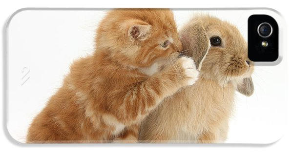 Ginger Kitten And Young Sandy Lop Rabbit IPhone 5 Case