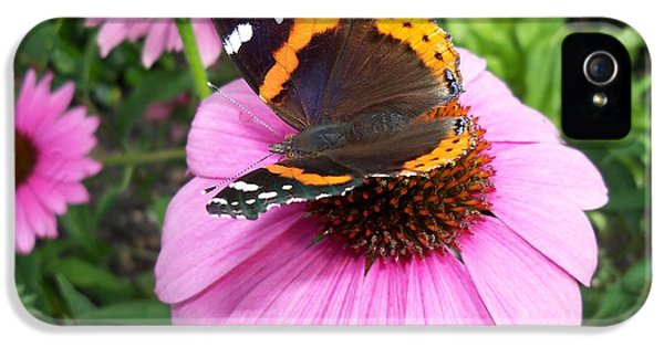Red Admiral Butterfly On Cone Flower IPhone 5 Case by Corinne Elizabeth Cowherd