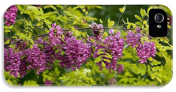 Rose Acacia (robinia Hispida) IPhone 5 Case by Bob Gibbons
