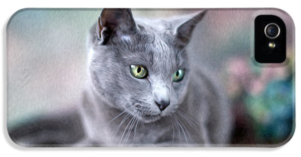 Cats iPhone 5 Case - Russian Blue by Nailia Schwarz