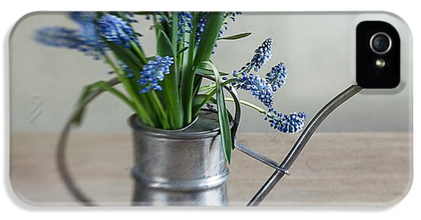 Still Life With Grape Hyacinths IPhone 5 Case by Nailia Schwarz