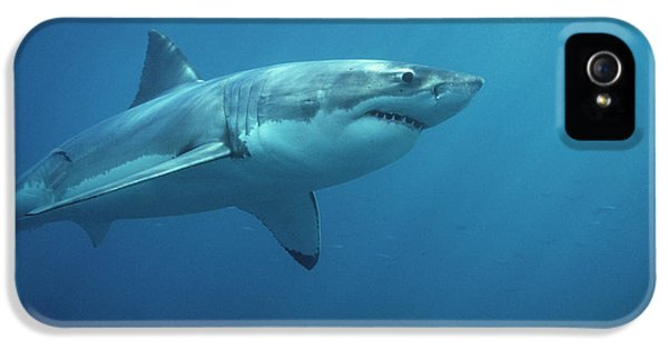 Great White Shark Carcharodon IPhone 5 Case by Mike Parry