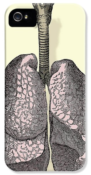 Breathe iPhone 5 Case - Human Lungs by Science Source