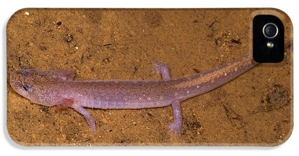 Ozark Blind Cave Salamander IPhone 5 Case