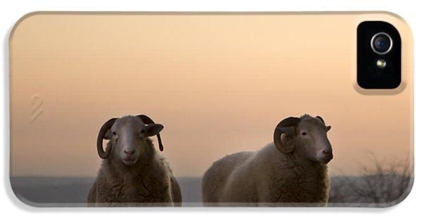 Sheep iPhone 5 Case - The Lamb by Angel Ciesniarska