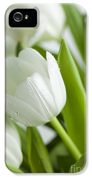 White Tulips IPhone 5 Case by Nailia Schwarz