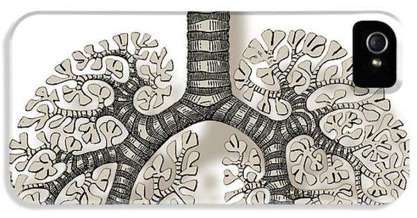Breathe iPhone 5 Case - Trachea, Bronchioles, And Alveoli by Science Source