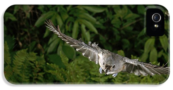 Tufted Titmouse In Flight IPhone 5 Case