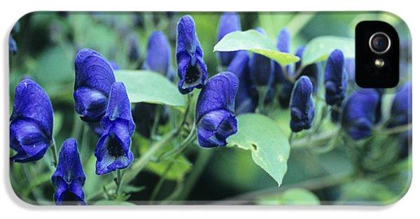 Aconite Flowers IPhone 5 Case