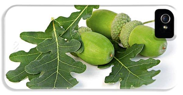 Acorns With Oak Leaves IPhone 5 Case by Elena Elisseeva