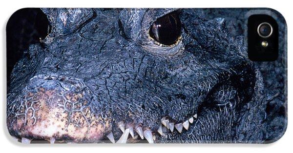 African Dwarf Crocodile IPhone 5 Case by Dante Fenolio