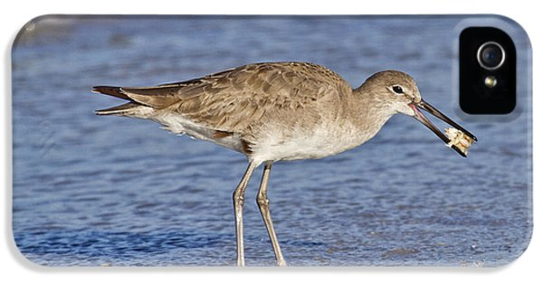 Sandpiper iPhone 5 Case - All In A Day by Betsy Knapp
