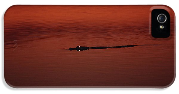 American Alligator Alligator IPhone 5 / 5s Case by Konrad Wothe