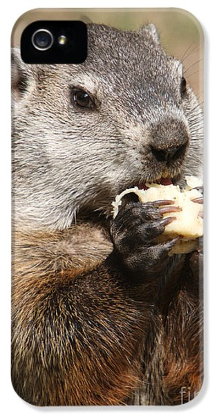 Animal - Woodchuck - Eating IPhone 5 / 5s Case by Paul Ward