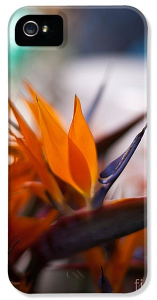At The Flower Market IPhone 5 Case by Mike Reid