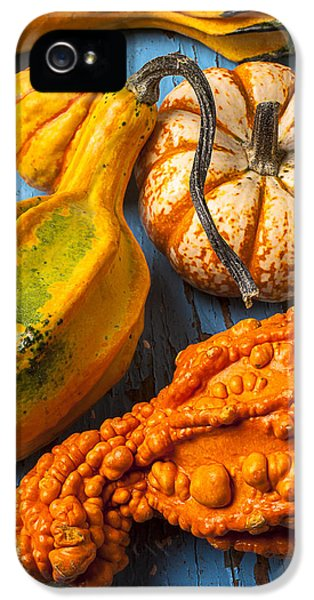 Autumn Gourds Still Life IPhone 5 Case by Garry Gay