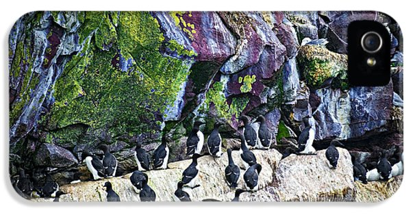 Birds At Cape St. Mary's Bird Sanctuary In Newfoundland IPhone 5 Case by Elena Elisseeva