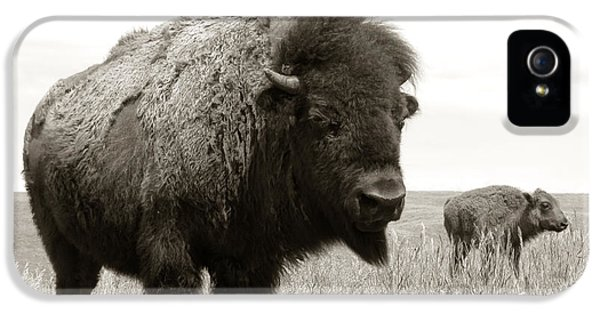 Bison And Calf IPhone 5 Case by Olivier Le Queinec