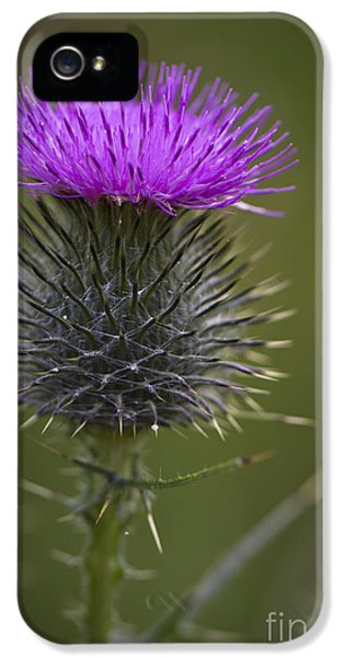 Blooming Thistle IPhone 5 Case