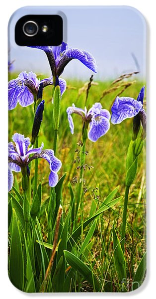 Blue Flag Iris Flowers IPhone 5 Case by Elena Elisseeva