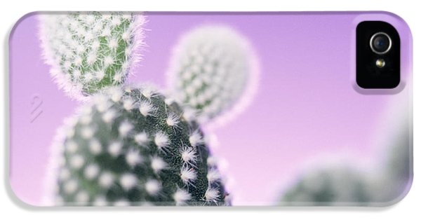 Cactus Plant Spines IPhone 5 Case by Lawrence Lawry