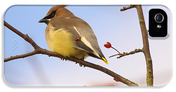 Cedar Waxwing  IPhone 5 Case by Sharon Talson