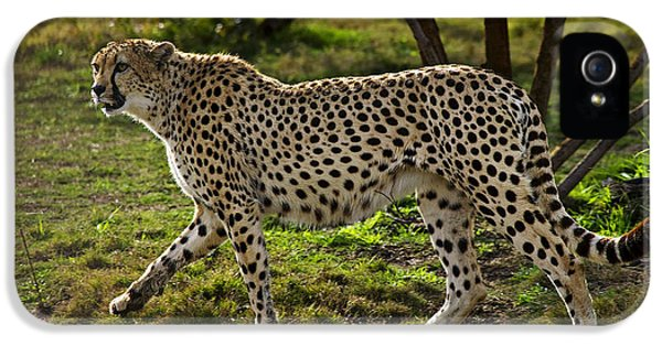 Cheetah  IPhone 5 Case by Garry Gay