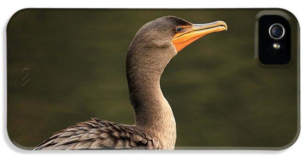Cormorant Up Close And Friendly IPhone 5 Case by Karol Livote