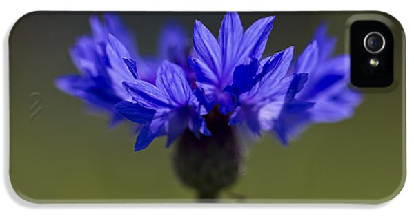 IPhone 5 Case featuring the photograph Cornflower Blue by Clare Bambers