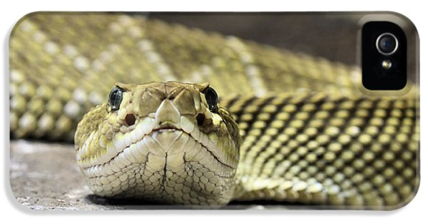 Crotalus Basiliscus IPhone 5 Case by JC Findley