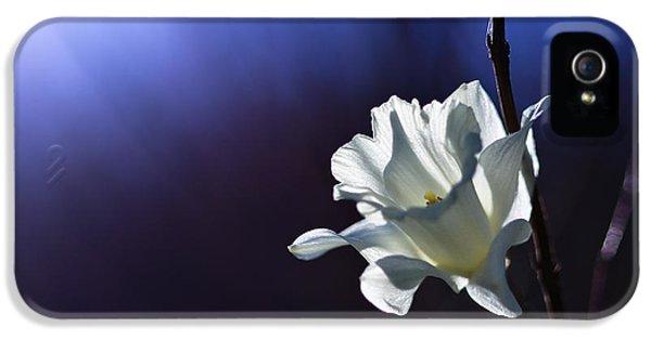 Daffodil Light IPhone 5 Case by Lori Coleman