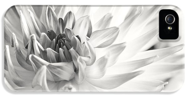 Dahlia Flower 02 IPhone 5 Case by Nailia Schwarz