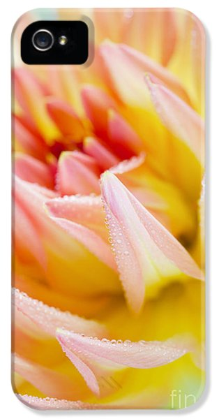 Dahlia Flower 04 IPhone 5 Case by Nailia Schwarz