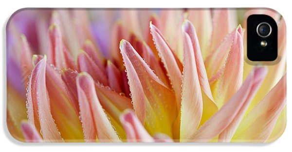 Dahlia Flower 05 IPhone 5 Case by Nailia Schwarz
