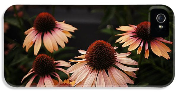 Echinacea Flowers Along The High Line Park - New York City IPhone 5 Case