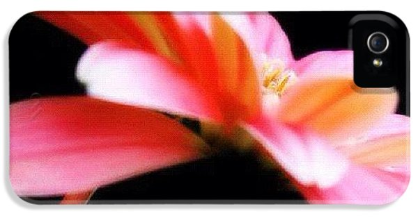 Edit iPhone 5 Case - #flower #flowers #daisy #pretty #beauty by Jamiee Spenncer