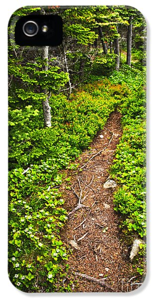 Forest Path In Newfoundland IPhone 5 Case by Elena Elisseeva
