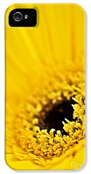 Gerbera Flower IPhone 5 Case by Elena Elisseeva