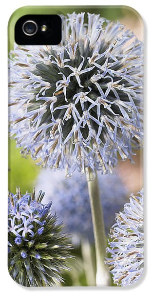 Globethistle Echinops Sp Blue Pearl IPhone 5 Case by VisionsPictures