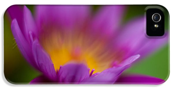 Lily iPhone 5 Case - Glorious Lily by Mike Reid
