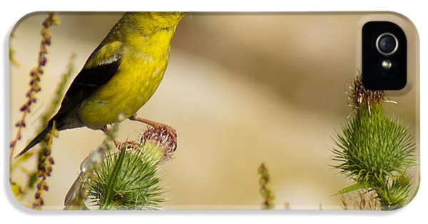 Goldfinch On Lookout IPhone 5 Case
