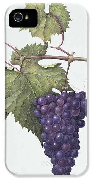 Grapes  IPhone 5 Case by Margaret Ann Eden