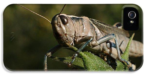Grasshopper 2 IPhone 5 Case by Ernie Echols