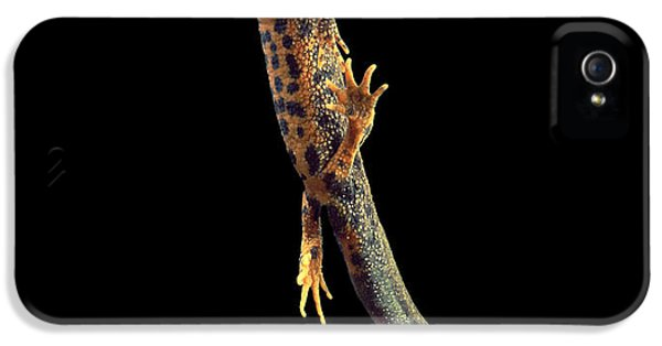 Great Crested Newt IPhone 5 / 5s Case by Andy Harmer